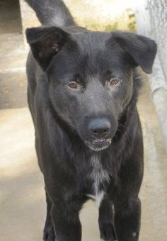 11/23/15***FROM 9 MONTHS AGO! STILL LISTED!************URGENT - PUPPY ALERT!!! Blake entered our shelter as a stray and is approximately 10 months old. Labrador Retriever Mix • Young • Male • Large. He is currently eligible for adoption. Tullahoma Animal Shelter c/o Public Works Dept. Tullahoma, TN 37388