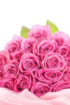 Pink Rose Flower Images Hd Wallpaper - Flower and Garden Photo Pink Flower Bouquet, Pink Rose Flower, Pink Flowers, Rose Petals, Red Roses, Pink Rose Wallpaper Hd, Wallpaper Wallpapers, Flower Images Hd, Hd Images