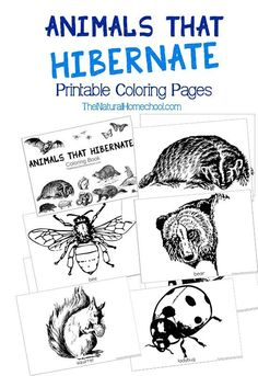With this coloring book, you will give your littles a pretty good idea on animals that hibernate list of 18 awesome animals. Some, you might not have even known that they are animals that hibernate in Winter!