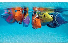 Fun Rainbow Reef battery operated swimming fish for the pool.