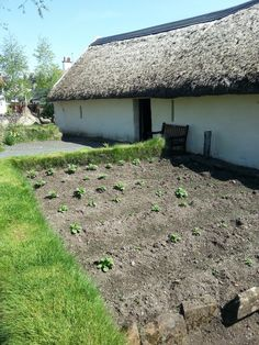 Robert Burns Birthplace Museum gardens - potatoes outside Burns Cottage