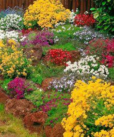 Kolekcja roślin alpejskich
