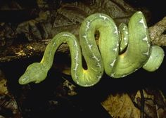Visit The Amazon Rainforest, Brazil - Holidays & Tours | Audley Travel