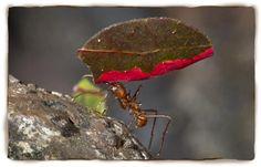 San Diego Zoo Leaf Cutter Ants