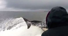 Orcas surround boat, prey on hiding sea lions | GrindTV.com