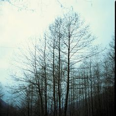 Spindles like a line drawing Drawing Skills, Line Drawing, Winter Walk, Dark Forest, Autumn Trees, Line Design, Places To See, Jungles, Explore