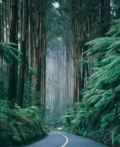 Redwoods, California. It's amazing how quiet it is with all of the pine needles as insulation.