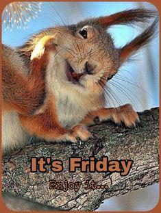 Rabbit, Friday, Animals, Bunny, Animaux, Rabbits, Animal, Animales, Hare