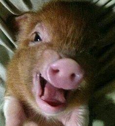 I will never eat Bacon again!