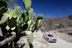 Look at some of the best captured images at WRC - Rally Mexico Niagara Falls, Rally, Mexico, Nature, Travel, Image, Cacti, Succulents, Naturaleza