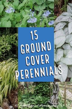 Plant these shade-loving ground cover plants under bushes and trees to help prevent weeds from growing and add some beautiful flowers to your garden. shade garden 15 Stunning Perennial Ground Cover Plants That Thrive in the Shade Dwarf Plants, Tall Plants, Shade Plants, Flowering Plants, Perennial Ground Cover, Ground Cover Plants, Gardening For Beginners, Gardening Tips, Container Gardening