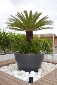 Terrasse contemporaine à Marseille: création d'une jardinière composée de végétaux résistants à la sécheresse Création et entretien de jardin Paysagiste à Marseille - Nicolas Roubaud - Vert Tige
