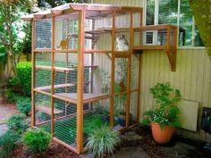 patios-para-gatos-3