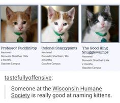OMG my father-in-law is naming the cats at the WI humane society