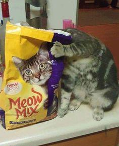 Bien dicen que la curiosidad mató al gato. | 17 Imágenes perfectas tomadas en el momento preciso