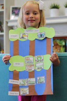 Academic Art: Layers of the Rainforest – My Favorite Rainforest Preschool, Rainforest Classroom, Rainforest Crafts, Rainforest Project, Preschool Jungle, Rainforest Habitat, Rainforest Theme, Rainforest Animals, Amazon Rainforest