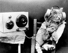 Radio Cat - 1926