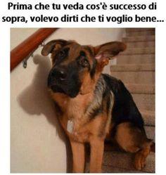 cane dolcissimo fa danni