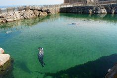 Zoo de la península de la Magdalena #Santander #Cantabria #Spain #Travel