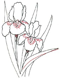 Now you are to outline the flower contours, draw the iris leaves with light touches, pick out the main flower parts with a pencil. Description from luntiks.com. I searched for this on bing.com/images