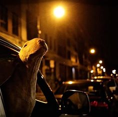 Night Time … Bully In The City….