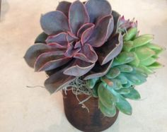 Handmade Paper Succulent Arrangement in Chest от RosyPaperPosies