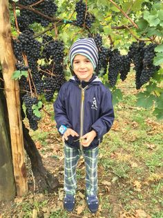 Young Balsamic Vinegar Producer