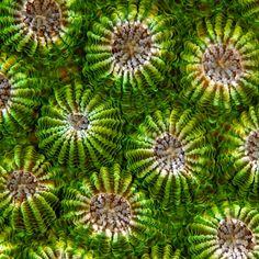 "Fascinating macro shots of underwater coral by Sylvie de Burrie, part of her series ""My Life Aquatic."""