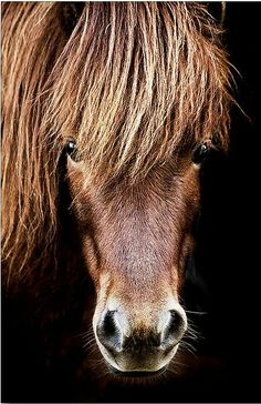 Things I Love About: Pony