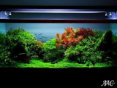 beautifully aquascaped aquarium Aquariums Pinterest