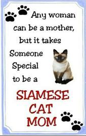 Siamese Cat Mom This Goes Out to my wonderful mother Toni Haffner Hickey Siamese Kittens, Cats And Kittens, Kitty Cats, Funny Kittens, Bengal Cats, Ragdoll Cats, White Kittens, Adorable Kittens, Crazy Cat Lady