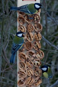 If you have some tree in your garden then you are surely hosting some every day. If you are a bird lover and wanted to welcome more and more birds to your garden. Why dont you try making DIY bird houses. See the bird house ideas we prepared for you. Bird House Feeder, Diy Bird Feeder, Homemade Bird Feeders, Decorative Bird Houses, Bird Houses Diy, Bird Feeding Station, Backyard Birds, Garden Projects, Beautiful Birds