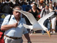 Seagull Steals Ice Cream Picture - Runt Of The Web