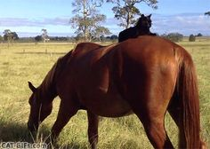 Animal Funny Clips and Images Funny Horse Videos, Funny Animals, Cute Animals, Super Cute Cats, Unlikely Friends, Horses And Dogs, Gifs, Cat Gif, Images Gif