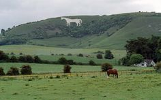 The White Horse at Westbury in Wiltshire. The grass has been scoured from the chalk hills, uncovering the white chalk beneath.     Tips on Horses and Ponies selection, riding, grooming Learn more http://rideaprettypony.blogspot.com
