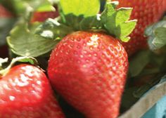 It's no coincidence that Mother's Day and strawberry season occur at the same time. Celebrate both!