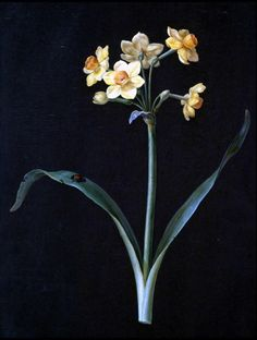 """""""Yellow Narcissus With A Ladybug"""" 1740, Barbara Regina Dietzsch, Germany,  OH: 14"""" OW: 10"""" Gouache and watercolor on vellum."""