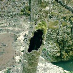 Silent scream #nature #naturelovers  #tree