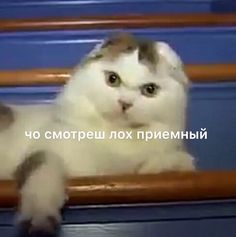 Stupid Pictures, Meme Pictures, Reaction Pictures, Cat Memes, Dankest Memes, Russian Memes, Funny School Memes, Lol League Of Legends, Work Memes