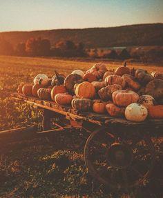 Autumn Cozy, Autumn Fall, Winter, Autumn Aesthetic, Christmas Aesthetic, Fall Wallpaper, Autumn Photography, Hello Autumn, Autumn Inspiration