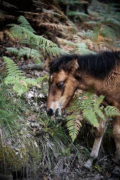 https://flic.kr/p/pDL6P2 | Foal | pratos-e-travessas.blogspot.pt/