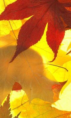 Outono seja ben-vindo!!!