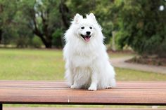 So Many Tricks To Teach Your Dog ** You can find more details by visiting the image link.