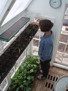 Compost to heat the greenhouse...? What a neat idea. Montana Wildlife Gardener: compost furnace