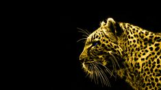 Black And Gold Animal Wallpaper 3d Wallpaper Lion, 3d Wallpaper Black, Gold Abstract Wallpaper, Walpaper Black, Animal Print Wallpaper, Lion Sketch, Angry Animals, Peacock Photos, Tiger Pictures