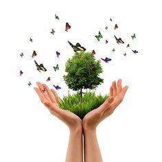 Feliz Día del árbol! Siembra uno y prolonga la vida del planeta.