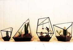 Geometric terrariums. Look at all those angles! Needs to come in pastel pink, blue, and green.