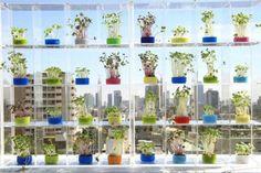 Indoor Garden Design - Window Herb Garden in a Highrise Growing Tomatoes Indoors, Herbs Indoors, Grow Tomatoes, Indoor Garden, Indoor Plants, Witch's Garden, Pot Plants, Garden Oasis, Garden Ideas