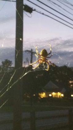 Spider big spider
