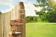 Little Curiosity by loulovesdanbo, via Flickr